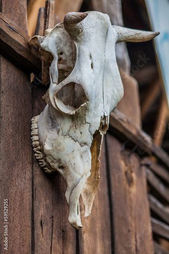 Old buffalo skull hanging on a wooden door
