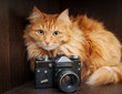 cat and vintage photo camera