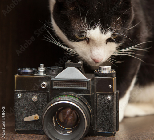 black and white cat and vintage photo camera
