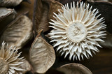 Natural dry flowers decor. Potpourri material closeup