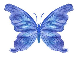 Акварельная бабочка на белом. Вариант 3.