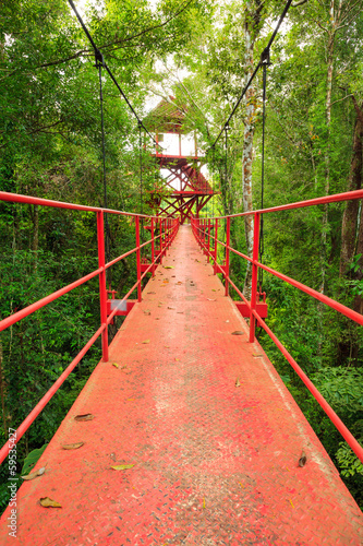Bridge to the jungle,Trang,Thailand