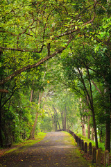 Road to forest, Thailand