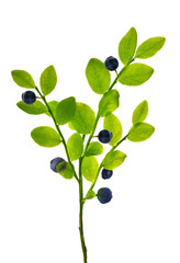 blueberry plant with berries on white