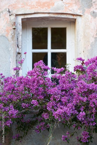 Window with flowers in Saint Tropez