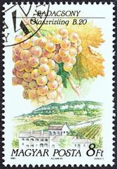 Riesling grapes variety, Badacsony (Hungary 1990)