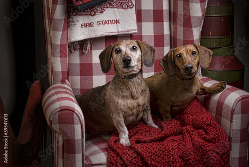 Two Dachshunds in a Red Checkered Chair