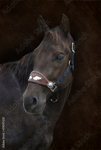 Brown Horse on Brown Background