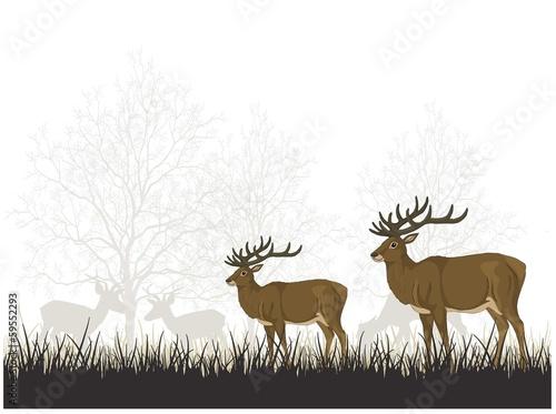 Ormanda geyikler