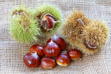 Shelled and unshelled Spanish chestnuts (Sweet chestnuts)