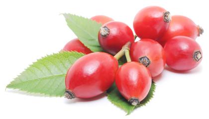 wild rose berries
