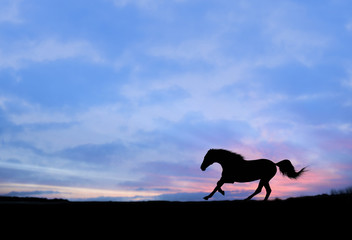 Horse running full gallop on sunset background Silhouette