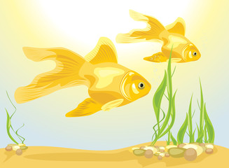 Two goldfishes among algae and pebbles