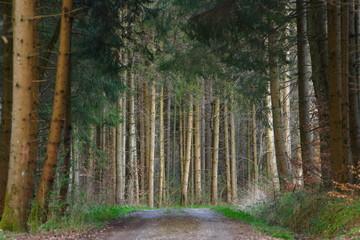 Waldweg im Schönbuch