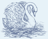 "Vector drawing of a series of sketches ""Birds"". Swan"