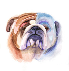 Colored bulldog's head