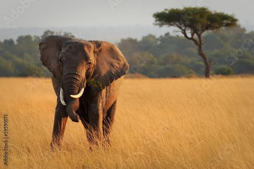 Deurstickers Afrika Masai Mara Elephant