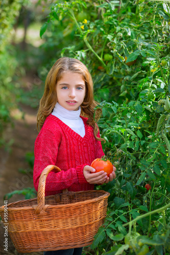 Farmer kid girl harvesting tomatoes