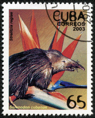 stamp shows solenodon cubanus and strelitzia regiae