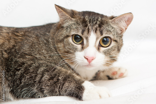 Scared cat with big eyes on white background