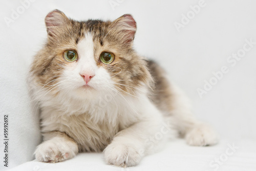 Scared cat with big sad eyes on white background