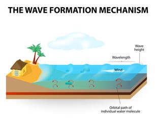 wave formation mechanism