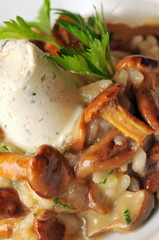 Fresh risotto with mushrooms and  mousse, close up shoot