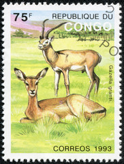 stamp printed in Congo, shows gazella granti