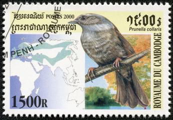 stamp printed Cambodia shows bird(prunella collaris)