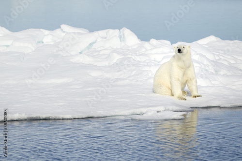 Tuinposter Ijsbeer Polar bear at Svalbard