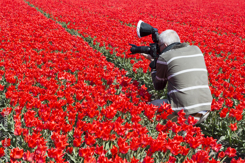 man making photos in red tulip field