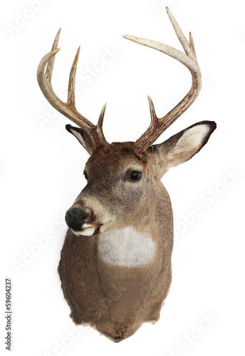 Foto op Plexiglas Hert Trophy Buck