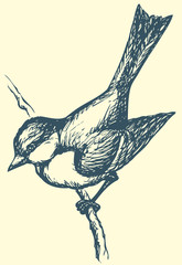 "Vector drawing of a series of sketches ""Birds"". Tit"