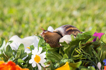 A large snails on a bouquet of artificial flowers