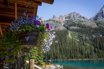 Cabin with a view at Lake O`Hara
