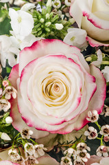 pink and white rose with chamelaucium