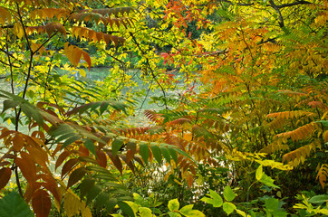 Fall colors of woods by the lake, Belgrade