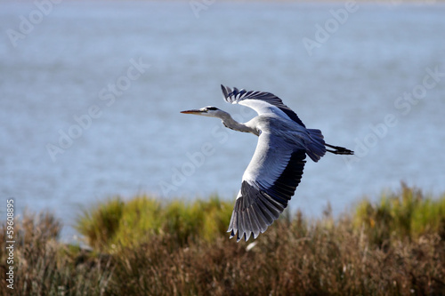 Heron flight