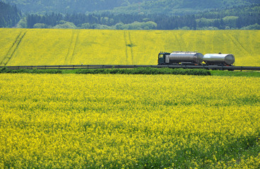 Oil transportation, truck in canola