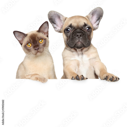 Portrait of a cat and dog on a white banner