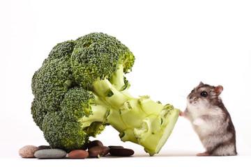 hamster eating cauliflower