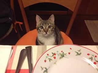 Gatto a tavola