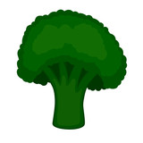 fresh green piece of broccoli