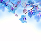 Fototapety Floral background of tropical orchids