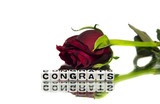 Congrats with rose