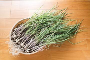 フローリングの床の上の浅葱