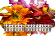 Seasons greetings with mixed flowers