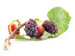 Mulberry on a branch and the green leaf