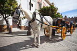 Horse Transport for Tourists in Sevilla, Spain