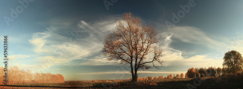 autumn, lone oak tree in a field